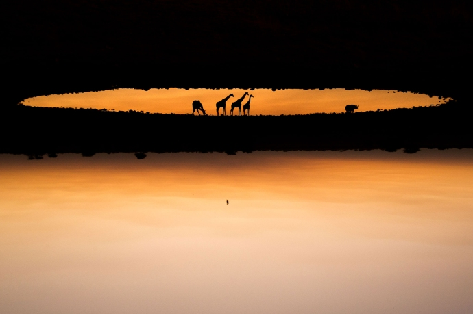 2015-wildlife-photographer-of-the-year-winners-3